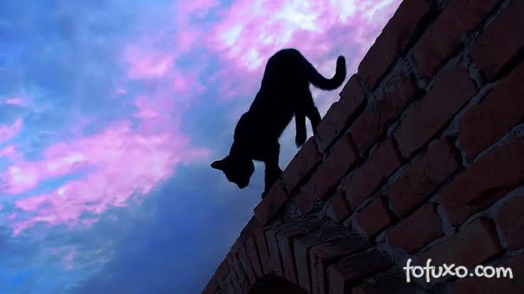 Gato agitado durante a noite: dicas para acalmar o felino!