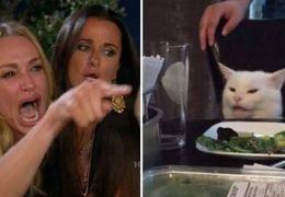 Quem é o gato que ficou famoso nos memes da mulher gritando?
