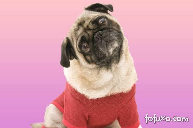 Nova pesquisa mostra que cachorros identificam palavras ditas por humanos