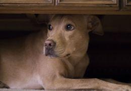 5 medos que a maioria dos cachorros têm