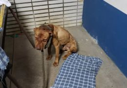 Polícia Civil resgata 19 cachorros em rinha de SP