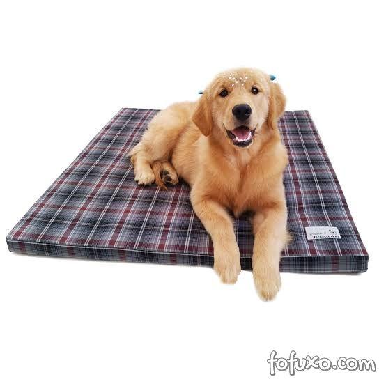 3 dicas para escolher o colchão ideal para o seu cachorro