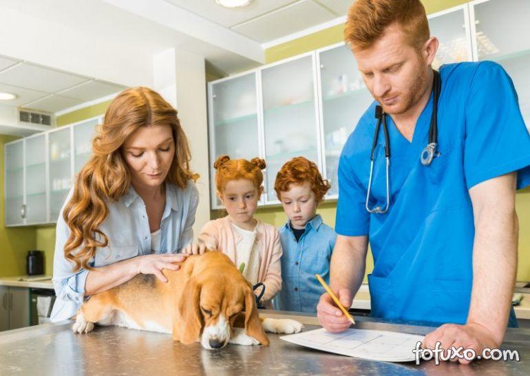 Cachorros com dores na coluna: Confira dicas para aliviar o incomodo