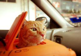 5 dicas para viajar com gatos sem estrese