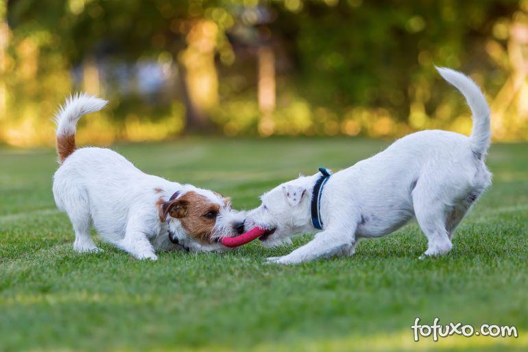 3 jogos para afiar as habilidades do seu cachorro