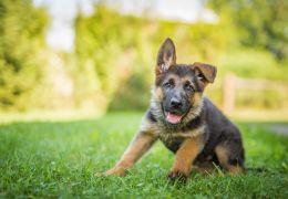 Confira os nomes mais comuns de cães e gatos em 2019 no Brasil