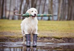 Dicas para passear com cachorros em dias de chuva