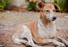 Confira quais são as 10 raças de cachorro mais populares do Brasil