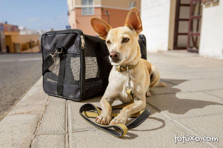 5 dicas para ter uma viagem de verão tranquila com o seu cachorro