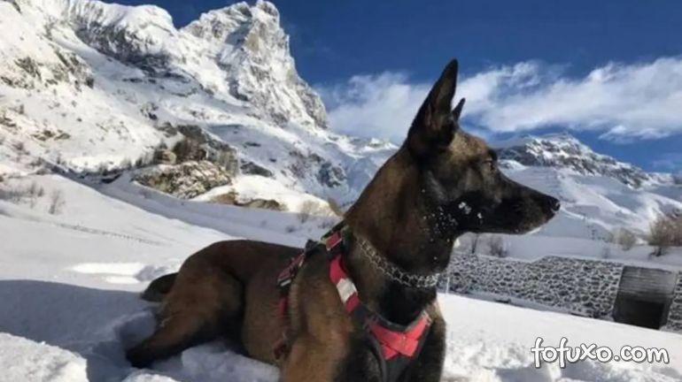 Cachorro fica 16 dias sem comida nos Alpes Italianos e sobrevive