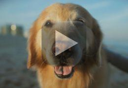 Americano compra comercial na tv para agradecer pela vida do seu cão