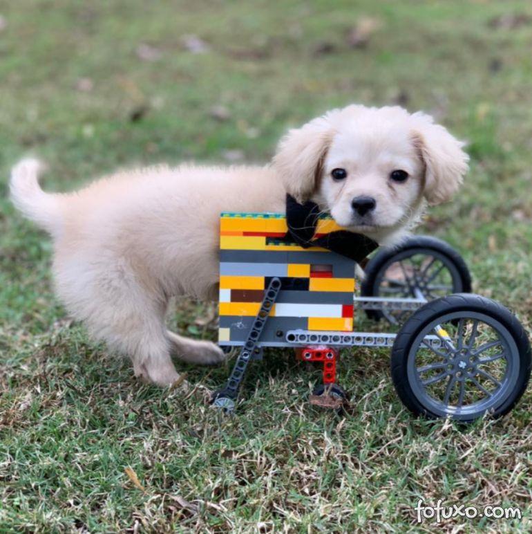 Garoto de 12 anos constrói cadeira de rodas para cão deficiente