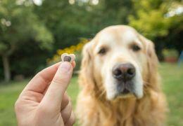 3 dicas para começar a adestrar os cachorros