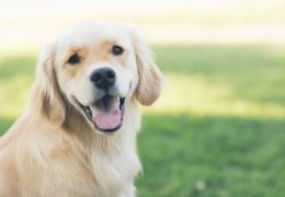 5 curiosidades impressionantes sobre o cérebro dos cães