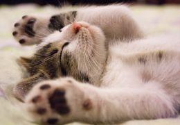 Dia Mundial do Gato: confira curiosidades sobre o 17 de fevereiro