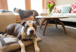 4 dicas para cuidar de cachorro dentro de apartamento