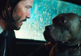 5 curiosidades sobre os cachorros de John Wick