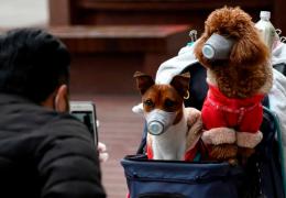Hong Kong isola cachorro que deu positivo para teste do Coronavírus