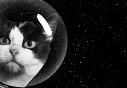 Primeiro gato lançado no espaço ganha homenagem