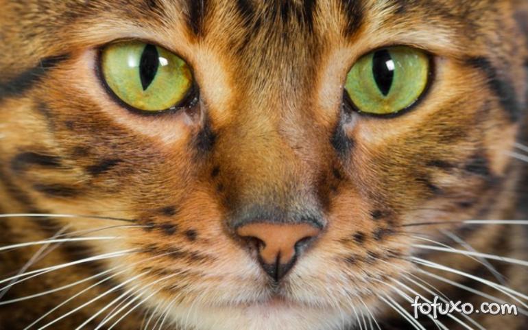 3 curiosidades sobre os olhos dos gatos