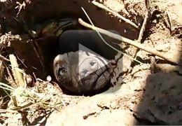Cachorro é encontrado enterrado vivo com ajuda de cadela