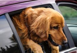 Conheça os perigos do Dramin para os cachorros
