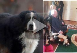 Cachorro de presidente irlandês invade evento oficial