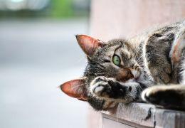5 dicas para deixar o seu gato mais seguro em casa