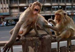 Animais selvagens ocupam ruas de cidades em quarentena