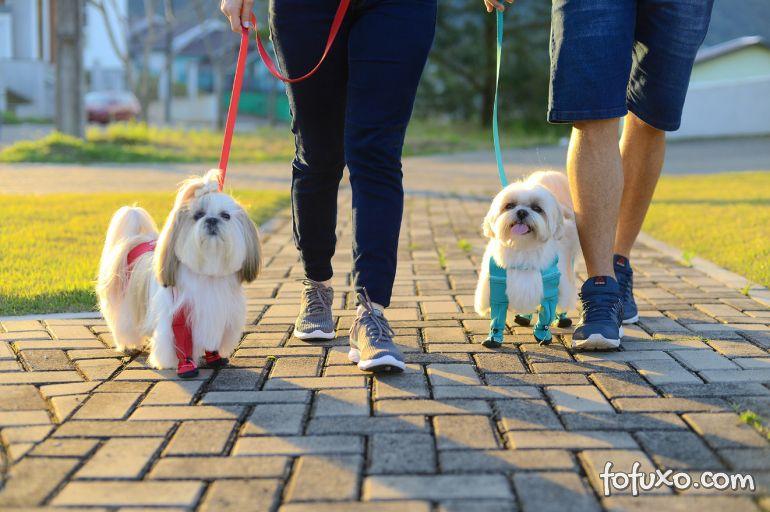 5 itens para aumentar os cuidados de higiene com cachorros