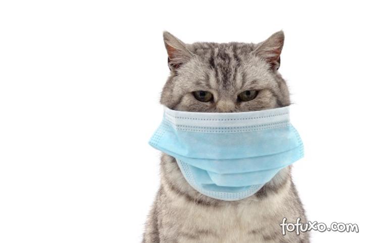 Gato testa positivo para novo coronavírus