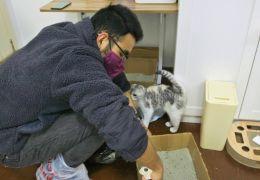 Jovem passa quarentena salvando animais presos na China