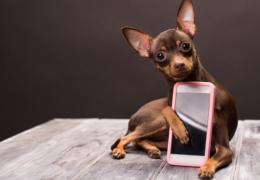 Cães podem reconhecer os donos na tela do celular?