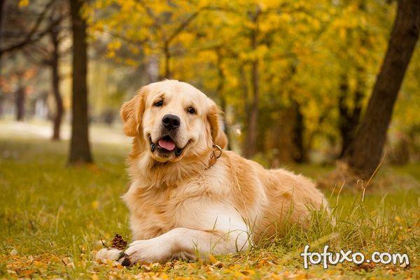 5 raças de cães recomendadas para quem precisa de apoio emocional
