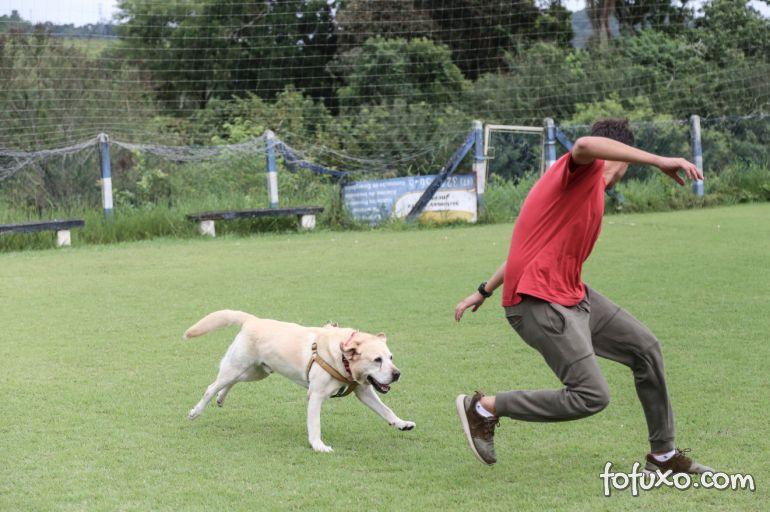 Dicas para educar o cachorro sem traumatizá-lo