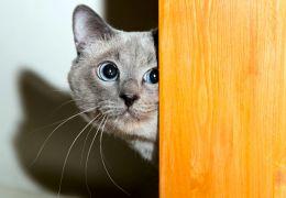 5 dicas para aliviar o estresse de gatos durante a quarentena