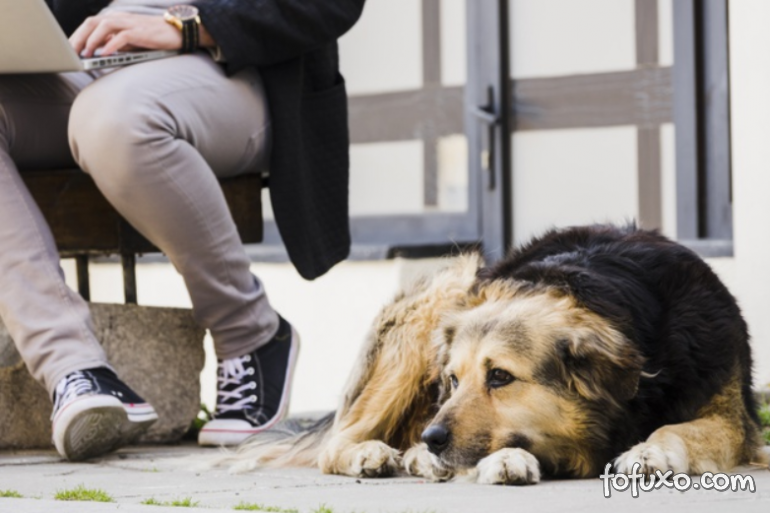 Aumentam casos de pessoas que oferecem lar temporário para animais