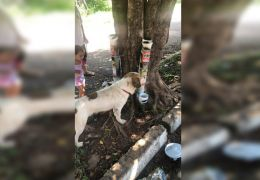 Morador do DF instala comedouros para animais abandonados