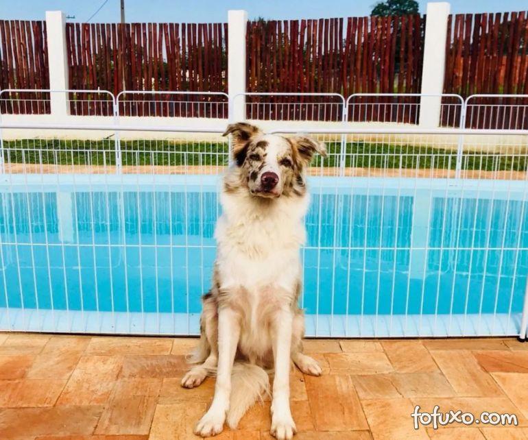 Confira cuidados de segurança para cachorros com piscina em casa