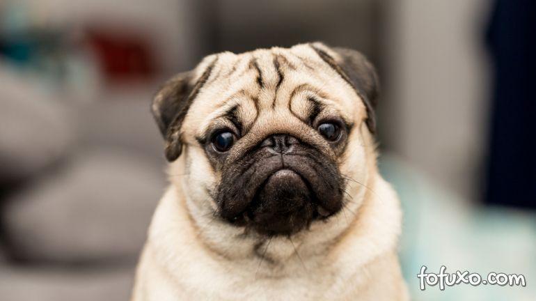Confirmado 1º cachorro com coronavírus nos EUA