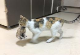 Gata leva filhote até hospital em busca de ajuda