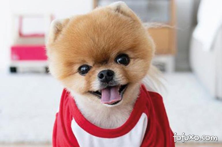 Conheça 4 cachorros famosos do Instagram