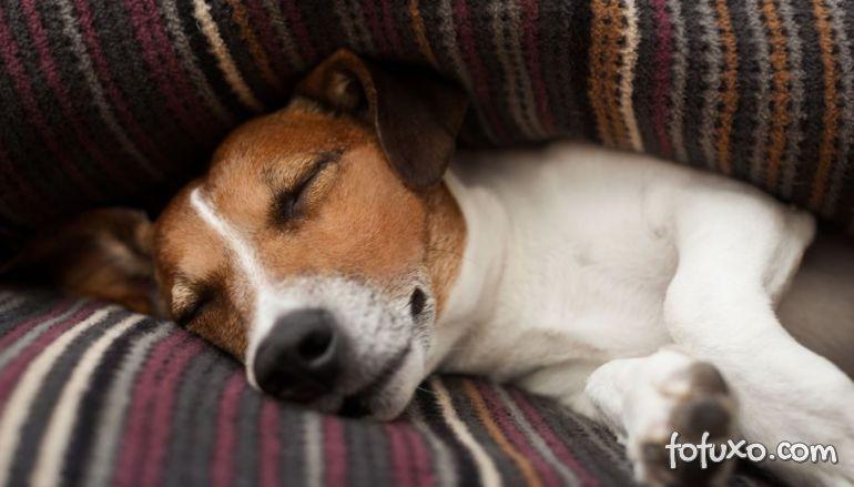 Cachorros podem ter sono alterado durante a quarentena
