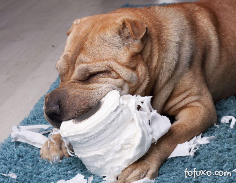 O que fazer quando o cachorro come papel?
