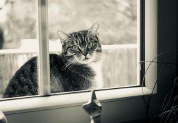 Por que os gatos gostam tanto das janelas?