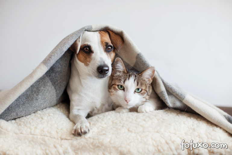 Como saber se o pet está com frio?