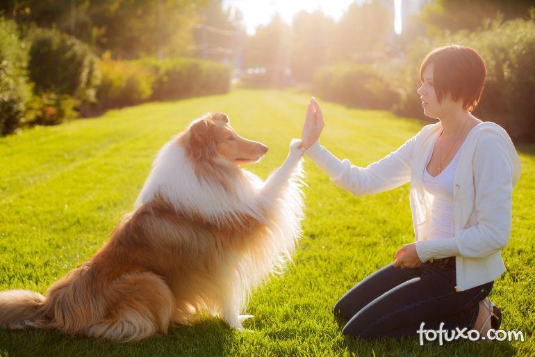 Reforço positivo para cachorros: saiba como usar!