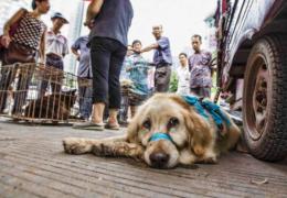 China tira cachorros de lista de animais que podem ser criados para consumo