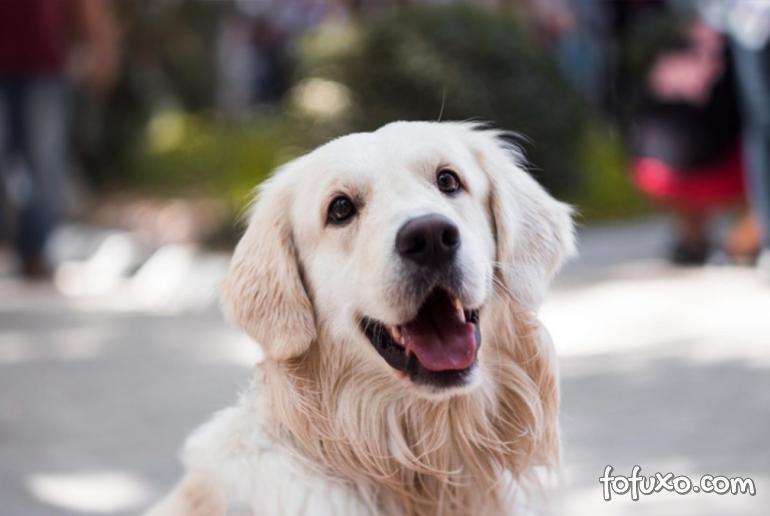 5 dicas para conseguir a foto perfeita do dog