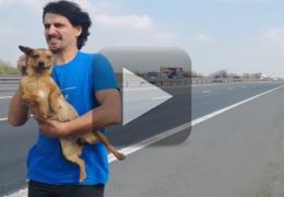 Cadela é retirada de rodovia movimentada por motorista